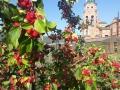 Забайкальские яблоки в урожайный год