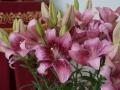 Первые весенние лилии
